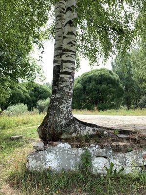 Бесов лес