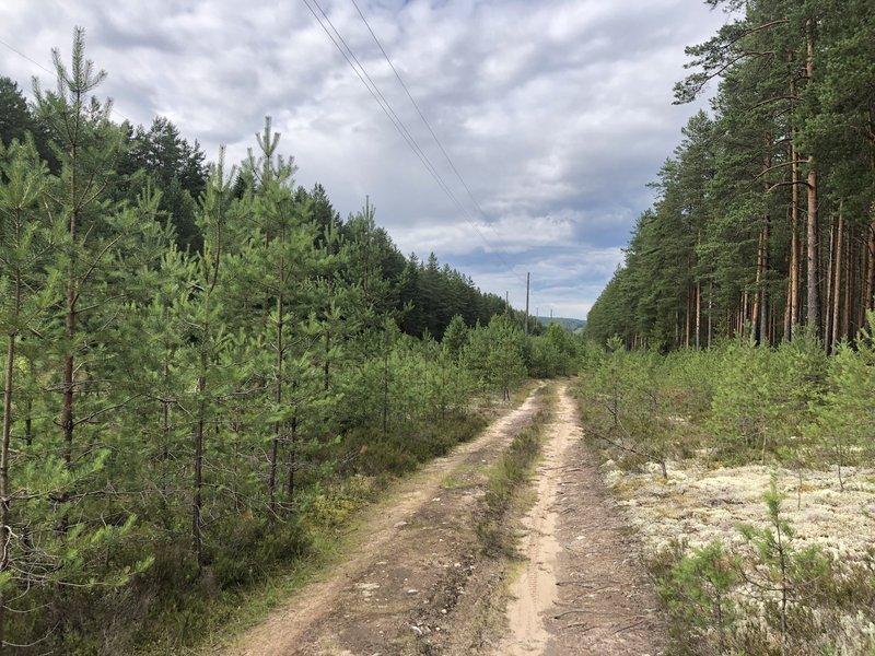 Великий лес